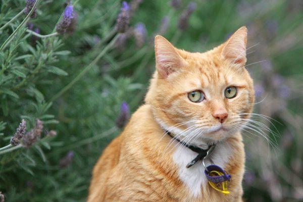Одна из причин заболевания - наличие кошки в доме