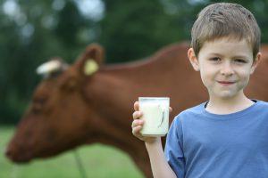 Молоко коровы или козы остается заразным даже спустя месяц после дойки