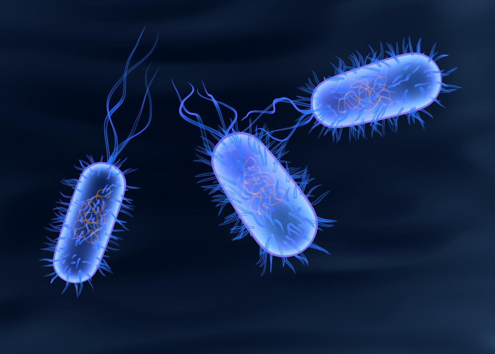 Источником инфекции сальмонеллез является сальмонелла – бактерия в форме палочки, открытая на рубеже XX века американским ученым
