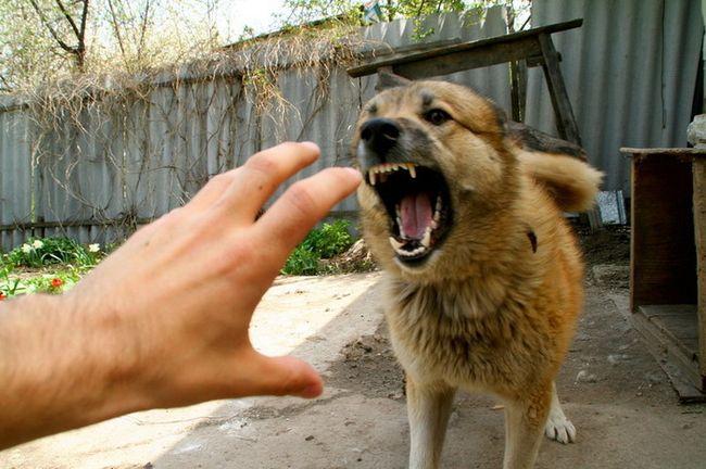 Животное невозможно вылечить от бешенства!