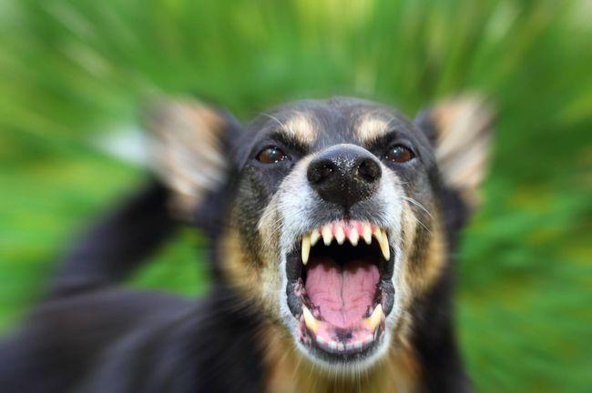 Анализ на бешенство у собак не проводится. Диагноз просто подтверждается или опровергается посредством клинической картины