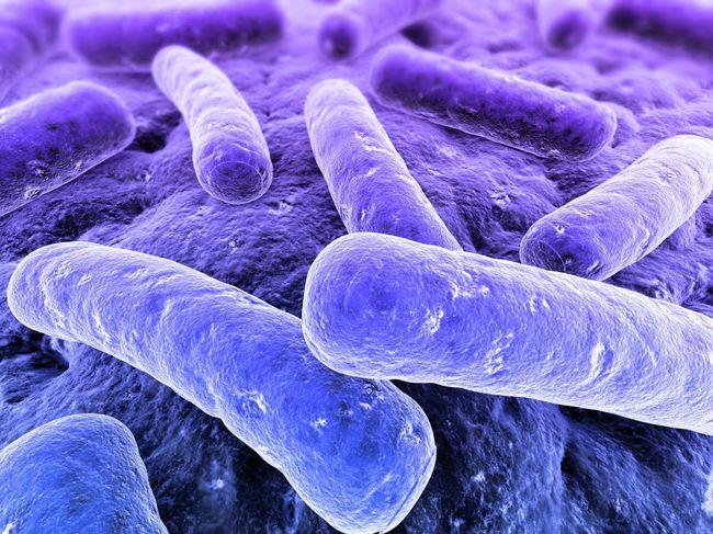 Провоцирует туберкулез в организме человека палочка Коха (в честь первооткрывателя)