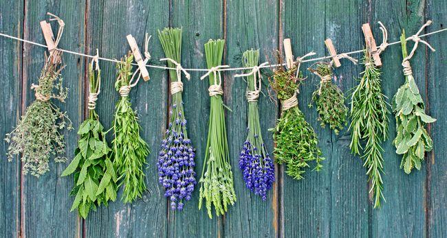 Лекарственные растения сотни лет ценятся и применяются при лечении множества заболеваний, в том числе и простудных