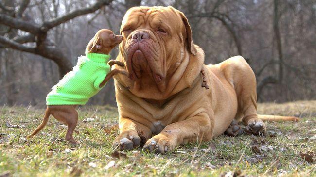 Чаще всего лишай передается между собаками во время прогулки