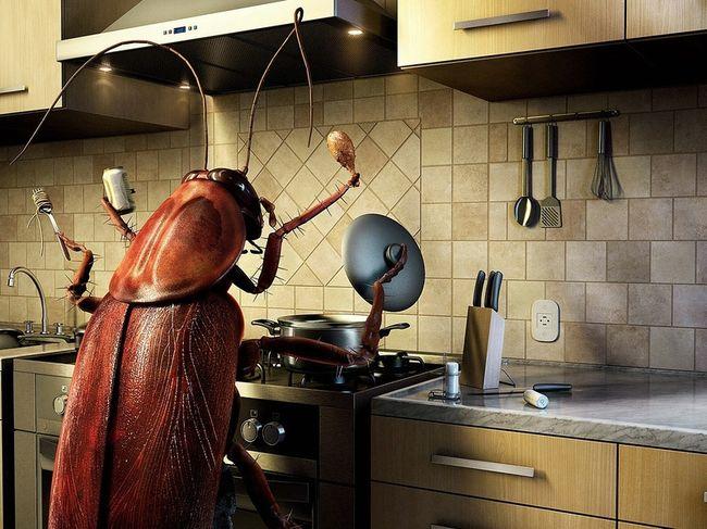Чем больше грязи на кухне - тем больше шансов, что тараканы поселятся в квартире