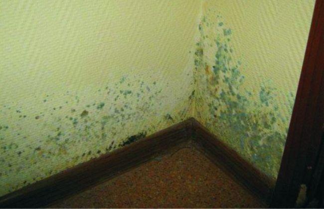 Пятна на стенах говорят о появлении плесени (грибка), которая зачастую возникает из-за сырости