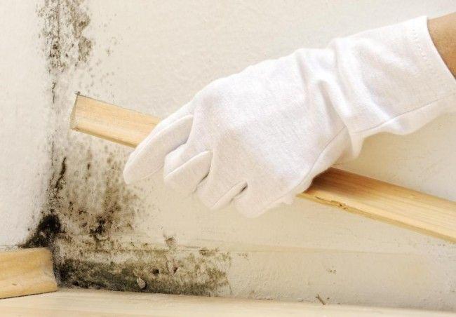 Неправильная гидроизоляция полов может привести к появлению плесени под плинтусами и ковром