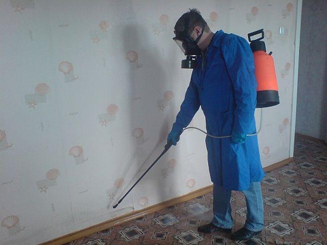 Вывести из дома клещей можно также с помощью дезинфекции жилища