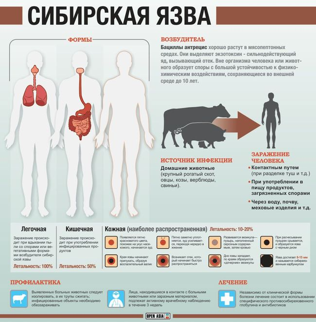 Сибирская язва - формы и прояаление