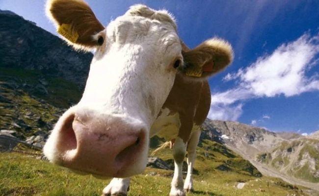 Бактерия сибирской язвы может храниться вместе с захороненных животным