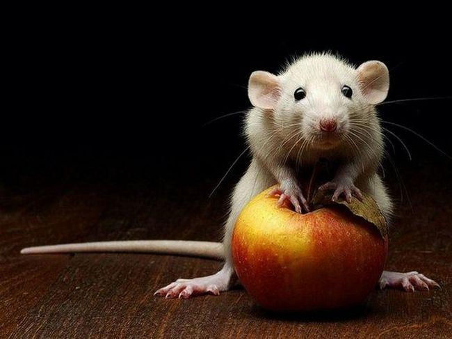 Также появление мыши во сне может говорить о недоброжелателе в близком окружении