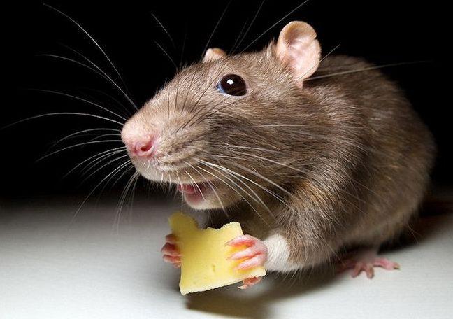 Если вы угостили мышь во сне, то в скорее возможно вам понадобится помощь близких