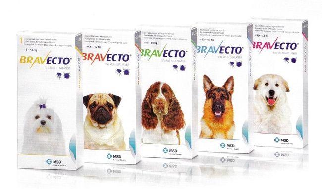 Bravecto - качественные таблетки от клещей для собак