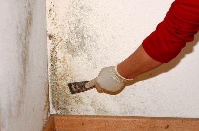 Если плесень в доме уже давно, то ее необходимо устранять кардинальными методами