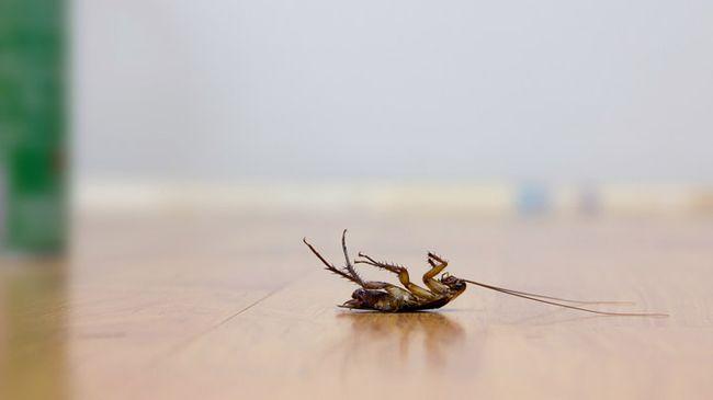 В наше время существует множество средств от тараканов. Но какое из них самое эффективное?