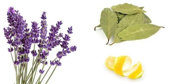 Пищевая моль не переносит запах лаванды, цитрусовых и лаврового листа