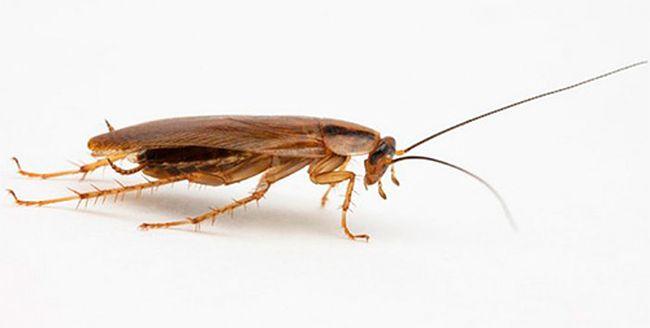 Тараканы во сне - это не всегда плохой знак