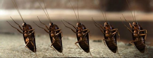 Также много тараканов во сне говорит о тайных страхах