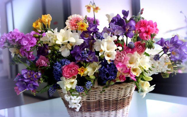 Тля может перебраться из подаренных цветов на комнатные растения