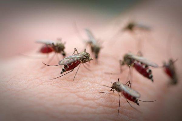 После комариных укусов кожный покров чешется, на месте раздражение развивается отек и гиперемия