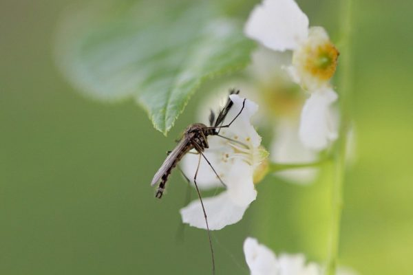Защитные средства от комаров представлены разными видами. Это могут быть спреи, крема, молочко, фумигаторы, аэрозоли, браслеты. Часть их них может использоваться только дома, это относится к устройствам, работающим от сети