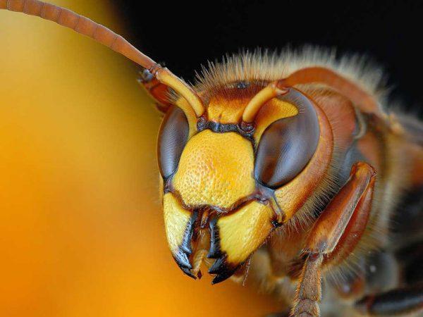 Убрать жилище насекомых можно с помощью плотной полиэтиленовой пленки или пакета, обработанных инсектицидным средством. Кокон быстро оборачивается пленкой, ее концы закрепляются скотчем на потолке