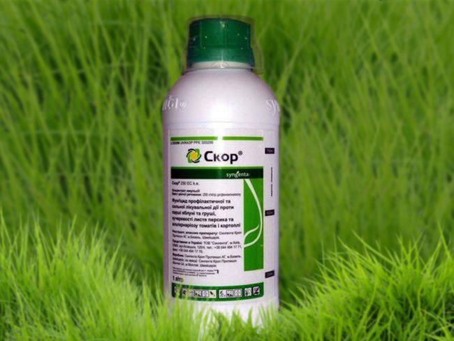 Препарат Скор применяется для борьбы с паршой (особенно у яблонь, груш и других семечковых и косточковых культур), мучнистой росой, курчавостью листьев, дырчатой и бурой пятнистостью, клястероспориозом, коккомикозом, монилиозом