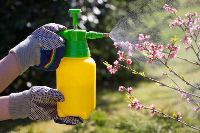 Фунгицид Строби позволяет быстро и эффективно справится с признаками грибкового поражения на ранних стадиях