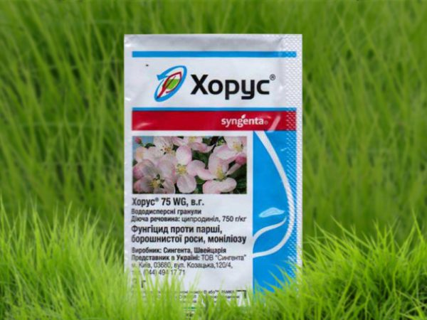 Специалисты рекомендуют применять Фунгицид Хорус исключительно для молодых растений