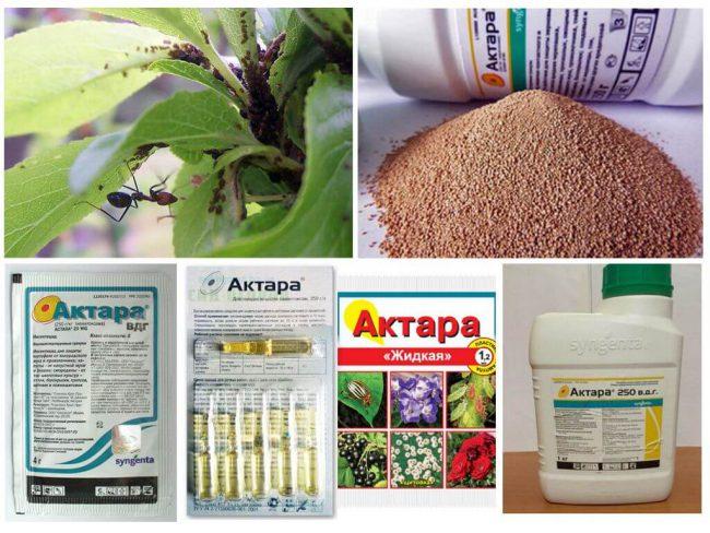 Активный компонент Актара инсектицида проникает внутрь растения сквозь листья и корневую систему