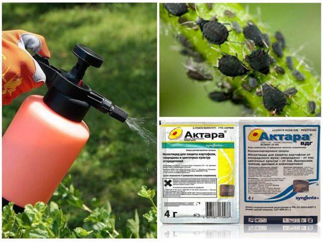 Препарат Актара используют вместе с пестицидами, фунгицидами, фербицидами и регуляторами роста
