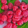 raspberry processing spring from pests and diseases – how to perform correctly? list of drugs