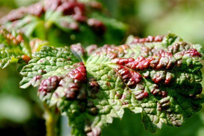 Появления тли на участке проще избежать, обеспечивая правильный уход за растениями