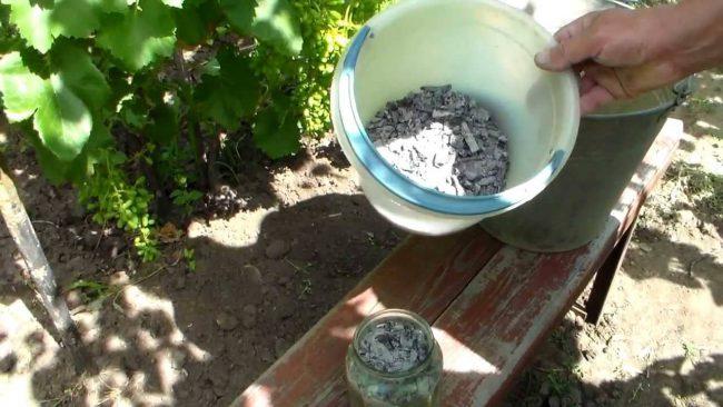 Обработка сада с мылом и древесной золой весьма полезна как во время цветения, так и при образовании завязей