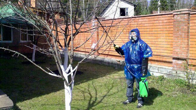 Опрыскивания производятся в сухую погоду при отсутствии ветра и рекомендуется использование респиратора