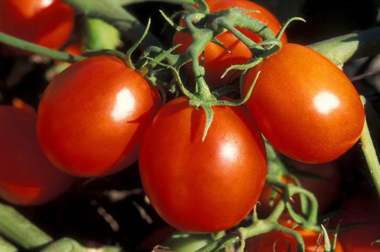 Томаты в открытом грунте и теплицах обрабатывают фунгицидом, чтобы защитить от сухой пятнистости (альтернариоза), фитофтороза, стеблевой гнили и мучнистой росы