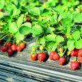 Якія фунгіцыды для раслін бываюць і як імі карыстацца? Спіс прэпаратаў і характарыстыкі