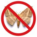 How to get rid of moths in the closet and in the kitchen? The most effective means of