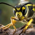 How to treat a wasp sting in the home?