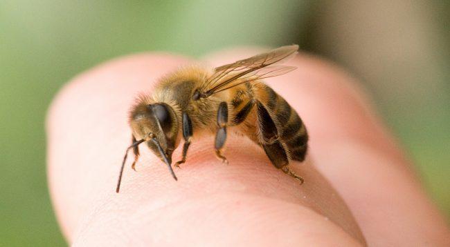 Если насекомое ужалило в шею или веко, то отек может быть большим. Особенно это касается детей и аллергиков