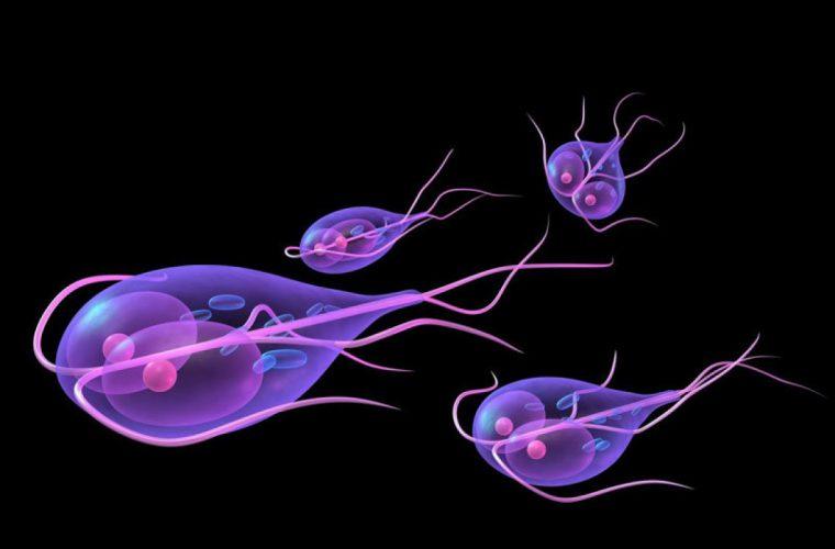 Немозол - эффективное средство для лечения лямблиоза у взрослых и детей